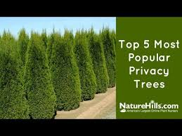 Top 5 Most Popular Privacy Trees Naturehills Com Youtube