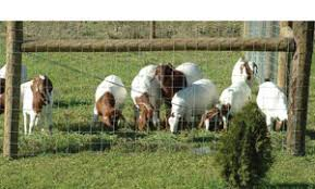 Woven Wire 4 X4 Sheep Goat 330 Roll