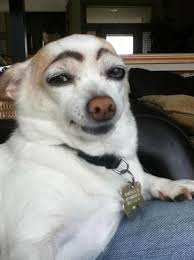 dogs with makeup eyebrows