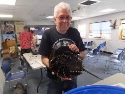 Horseshoe Crab Festival draws a crowd | Cape Gazette