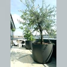 large plant pots for trees odapenley co