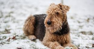 dog coat types and how to care for them