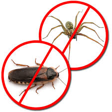 Pest Control Companies Near Me Edmonds WA 98026 – Pest Exterminators Near Me