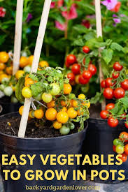easy vegetables to grow in pots great