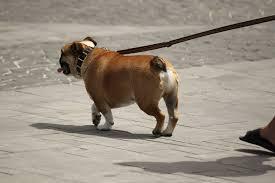 dog nail file with ed dog