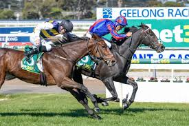 Geelong Cup winners have fared heading ...