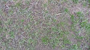 crabgrass how to get rid of this weed