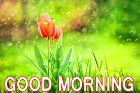 best good morning images good morning
