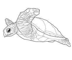 Hawksbillse Zee Schildpad Kleurplaat Gratis Kleurplaten Printen