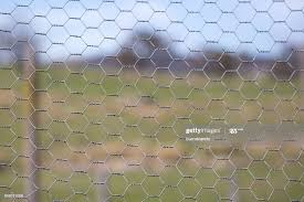 Chicken Wire Fence Makes A Pattern Against A Green Grass Rural Background High Res Stock Photo Getty Images
