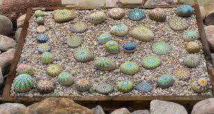 diy painted rocks for your garden my