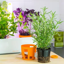 greens indoor kitchen garden
