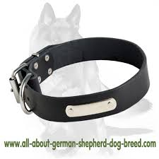 leather dog collar with metal nameplate