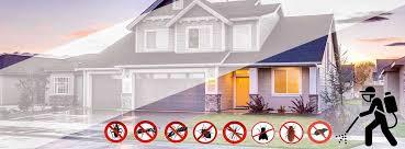 Pest Control - Pest Control Dubai | Best Price Services Company