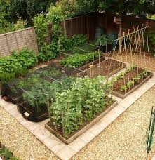 backyard vegetable garden ideas