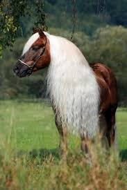 Pin by Abby Sprouse on Life Fantastic | Horses, Beautiful horses, Pretty  horses