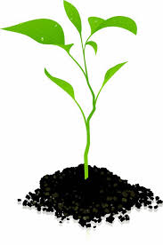 Download Growing Plant Photos PNG Download Free HQ PNG Image ...
