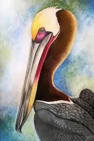 Pin by Hilda Gilbert on Artworks in 2020 | Pelican art, Watercolor bird,  Bird watercolor paintings