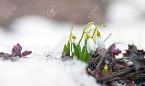 Image result for late winter early spring photos