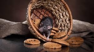 Bisa Jadi Sumber Penyakit, Begini Cara Mengusir Tikus dari Hunian