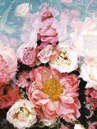 logan lds temple flower patch