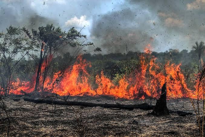 """Resultado de imagem para queimadas"""""""