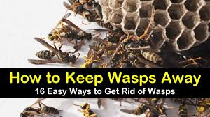 how to keep wasps away 16 ways to get