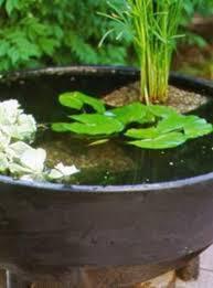weekend project water garden in a pot