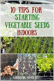 vegetable seeds indoors