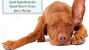 renal t dog treats ings