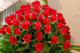 باقة وردة حمراء جميلة جدا