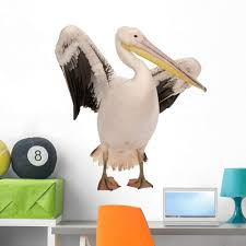 Amazon Com Wallmonkeys White Pelican Wall Decal Peel And Stick Graphic 36 In H X 34 In W Wm312039 Furniture Decor