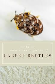 easy ways to get rid of carpet beetles