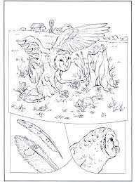 Uil Op Jacht Kleurplaten Vogels