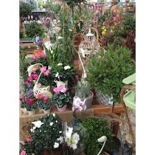 whitegates nursery northallerton