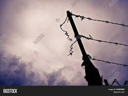 Barbed Wire Image Photo Free Trial Bigstock