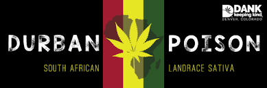 Durban Poison Cannabis Flower at DANK Dispensary in Denver