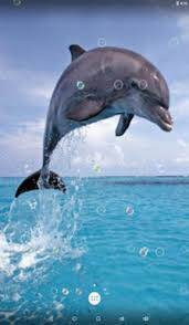 dolphin live wallpaper apk for android