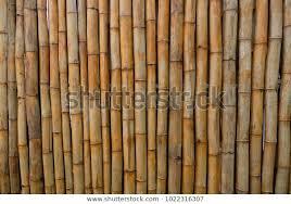 Bamboo Wall Bamboo Fencing Bamboo Screening Stock Photo Edit Now 1022316307