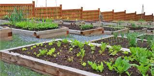 urban agriculture next cc