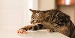 dry wet cat food for diabetic cats