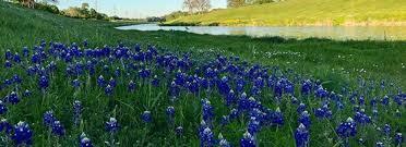 flower power hot spots for bluebonnet