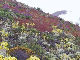 Image result for científico Volkmar Vareschi Flora de los páramos de Venezuela (1970)