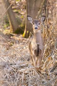 Deer Proof Fence And Designs Deer Netting Deer Fence Usa