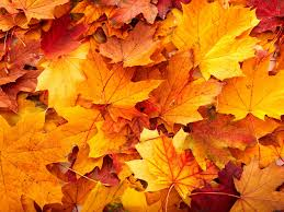 autumn leaves wallpapers with yellow