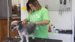 Pet grooming service opens in Forest City | Forest City Summit ...