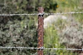 Two Strands Of Barbed Wire Fence On Stock Image Colourbox