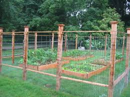 Fenced Garden Notice Chicken Wire At Base Garden Fencing Cheap Garden Fencing Garden Fence