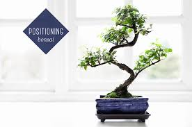 bonsai tree care for beginners ftd