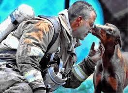 Dog Kissing Firefighter | Pregnant dog, Animals, Doberman